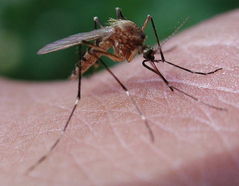 how is ddt used to control malaria